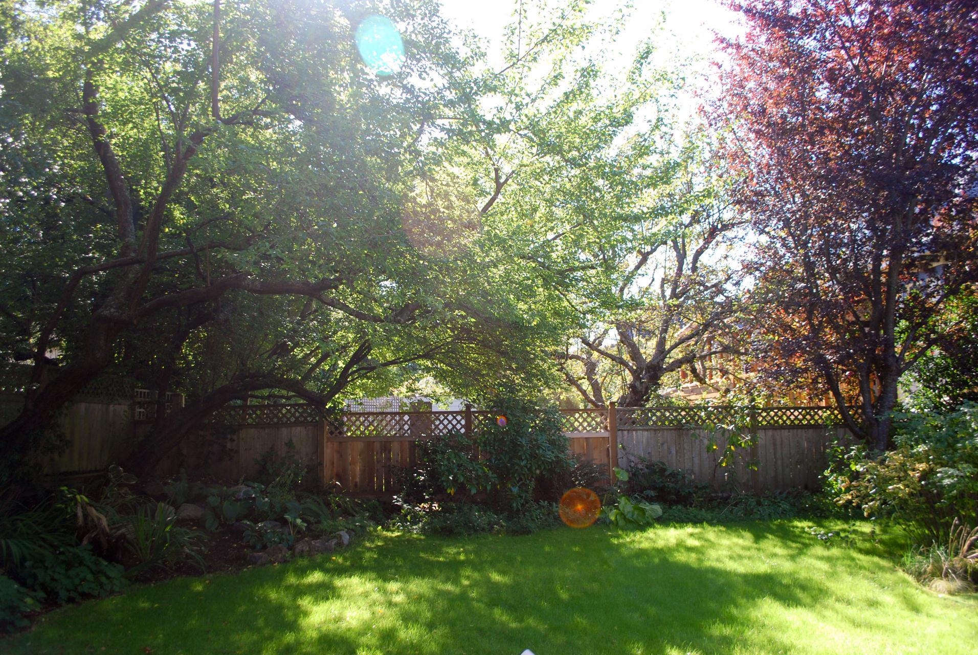 Fenced backyard and garden
